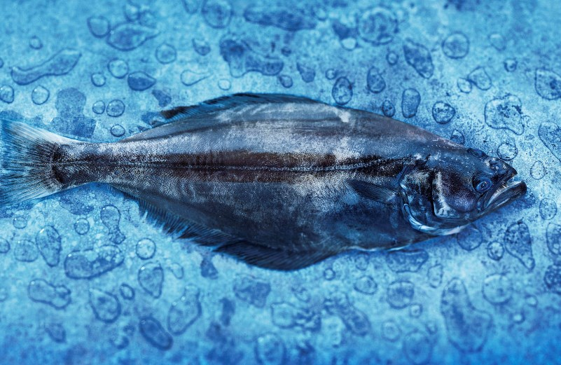 greenland-halibut
